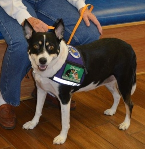 PTSD Service Dogs have access by LAW!